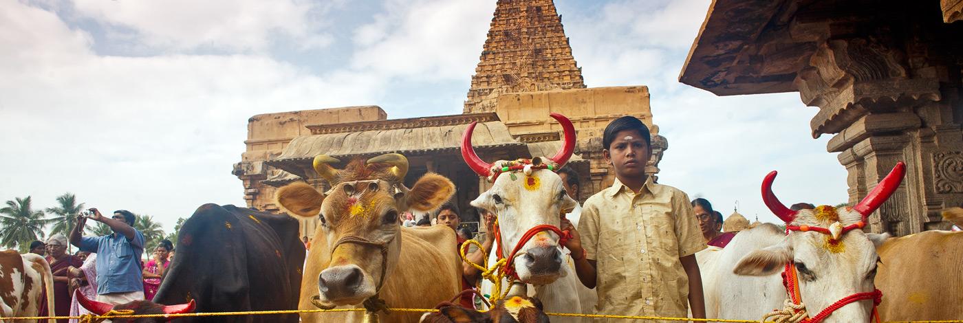 Tanjore-Tamil-Nadu-South-India-4701