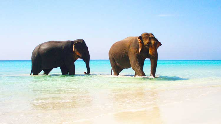 Andaman Tour - Elephant beach at Havelock because the white sand and the fresh green-blue water will keep you amazed.
