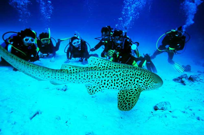 scuba diving in andoman