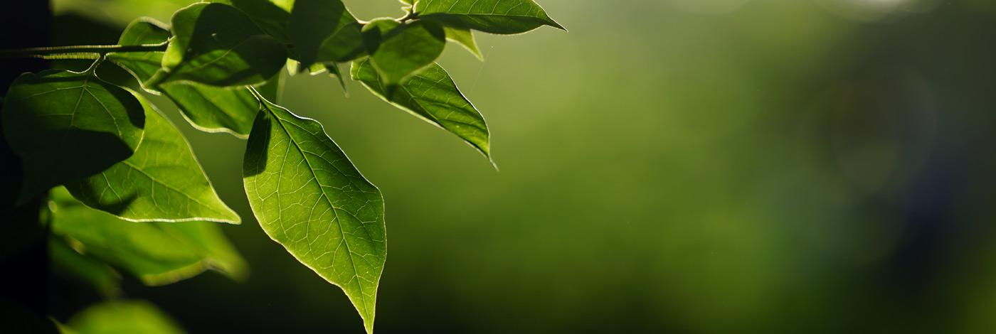 Ayurveda-Nature-4701