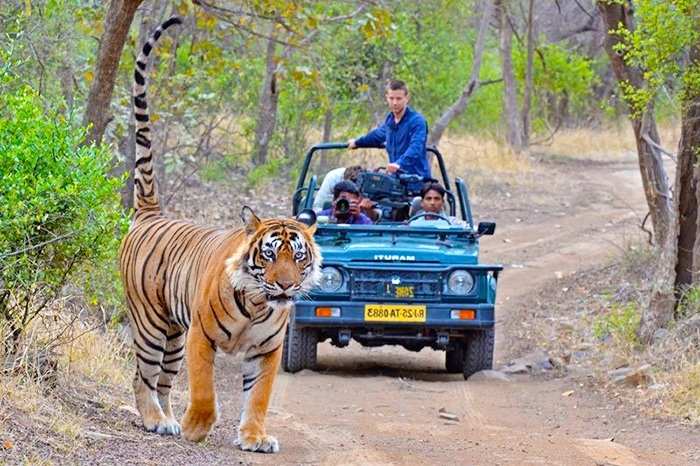 ranthambore national park reserve